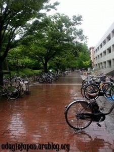 Bicycles in Osaka U